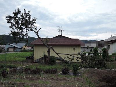 木 /> 地震とは無関係です。 地震の前日に折れたようなので。<a name=
