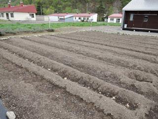 ジャガイモ植え